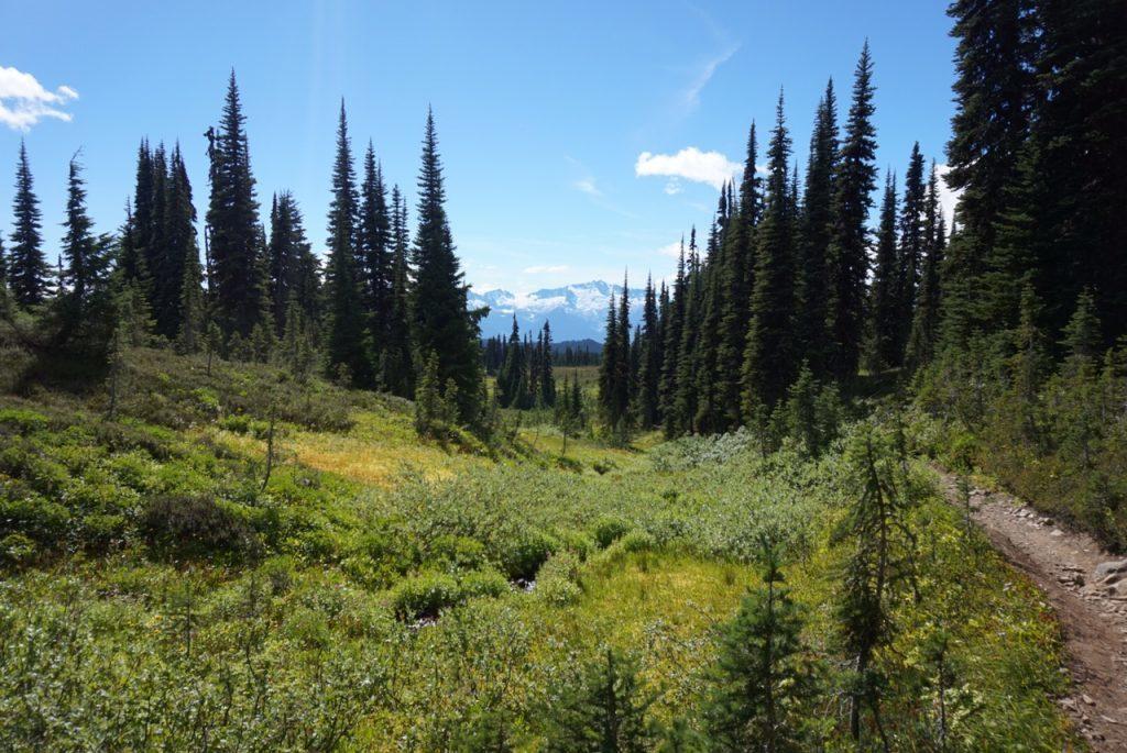 panorama ridge, hike, meadows