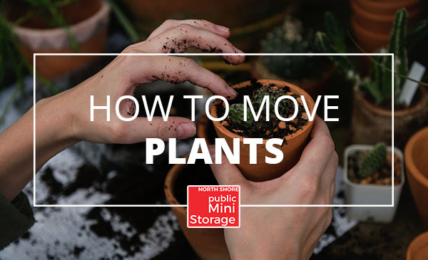 moving plants, how to, tips