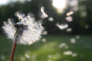 pollen, flower, field